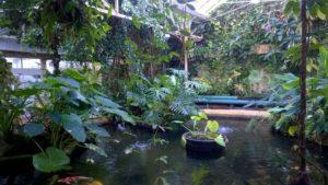Tropical House at Birmingham Botanical Gardens