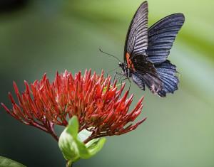 Butterfly Farm at Birmingham Botanical Gardens