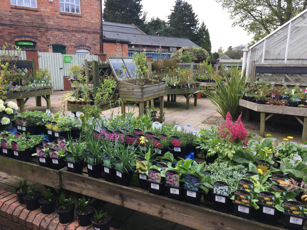 Plants and Flowers for Sale at Birmingham Botanical Gardens