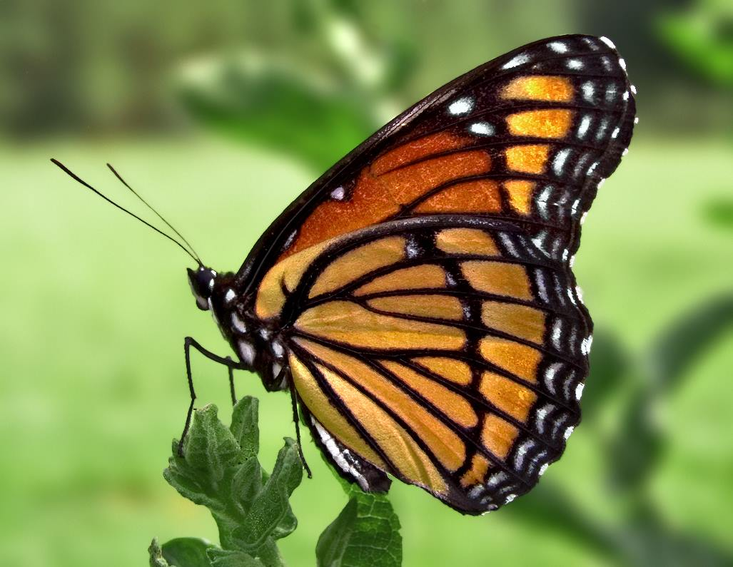 Butterfly House Re-opens