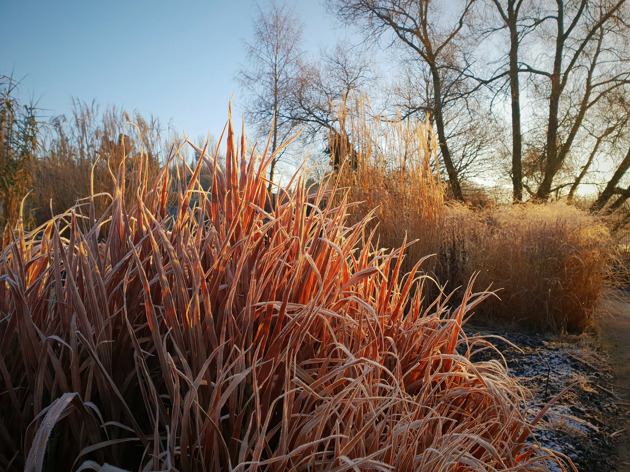 november grass - area of the month