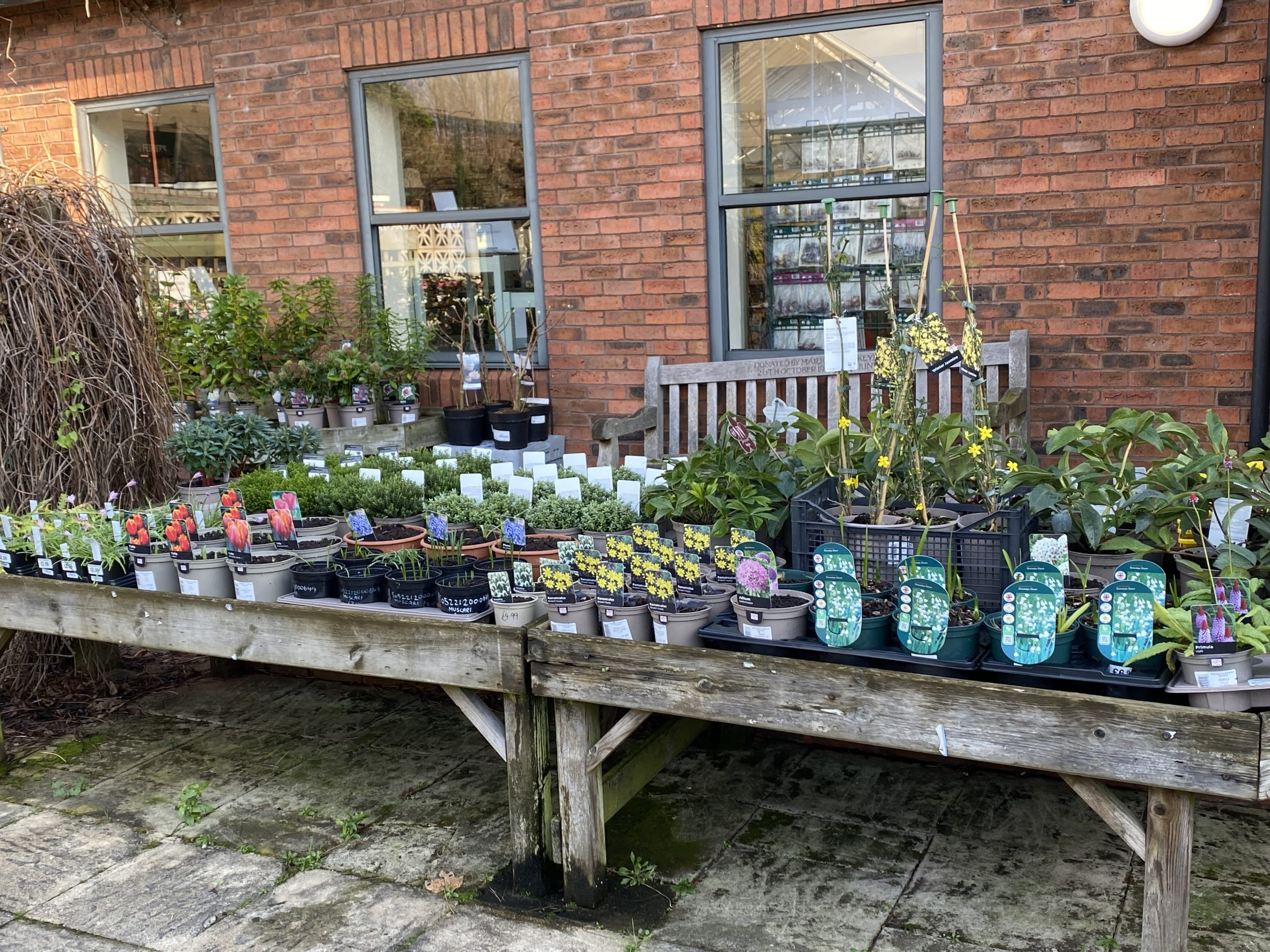 Plants for Sale at the Gardens